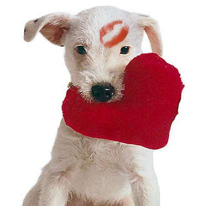 dog-with-heart-kiss