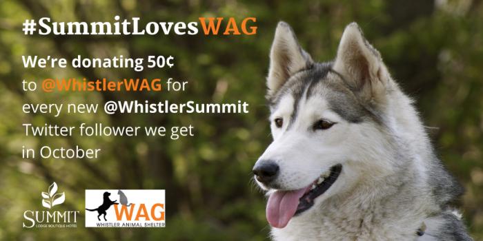 SummitLovesWag-Twitter1-700x350