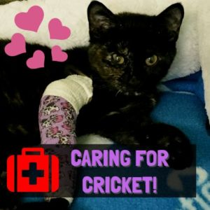 caring-for-cricket