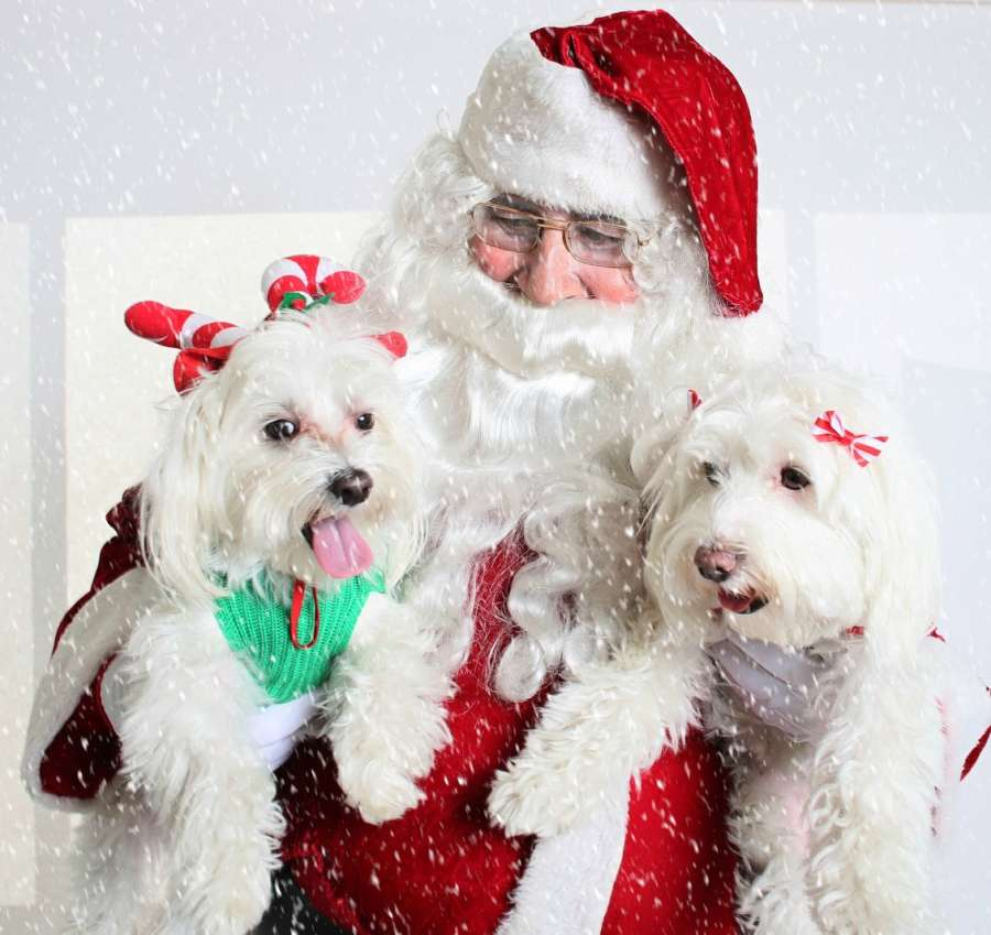 Santa Dogs snow
