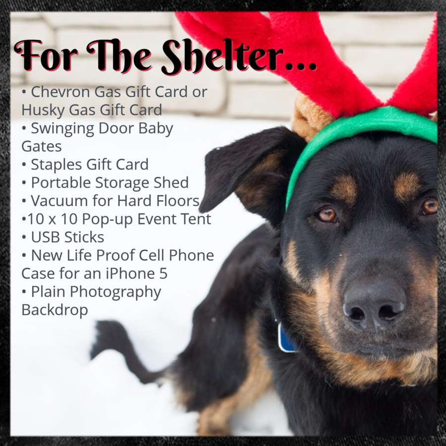 for the shelter
