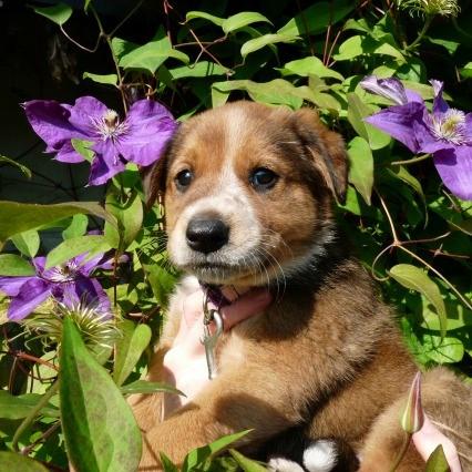 pup in bush