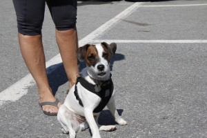 2014 08 Dog Days of Summer with WAG 062 (30)