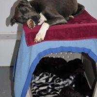 AnniePupsSleeping