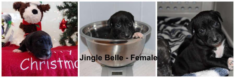 Jingle Belle!