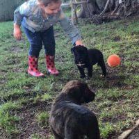 PuppySocialization-1