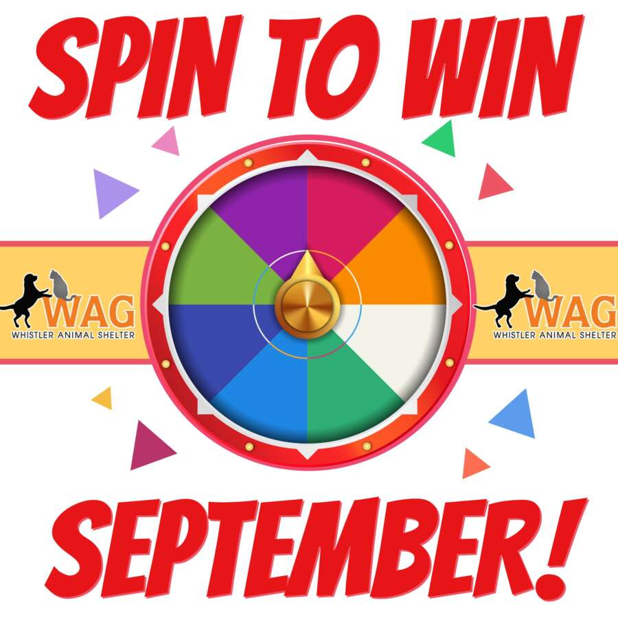 spin to win insta