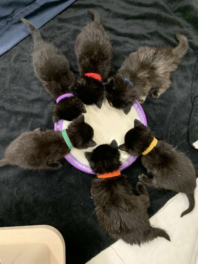 contest kittens2