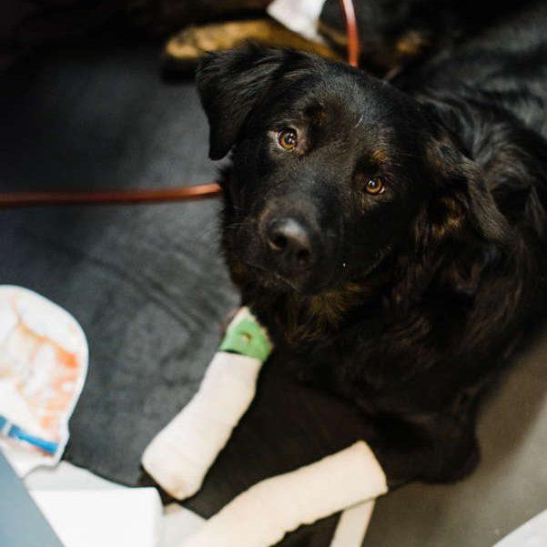 Critical Care Medical Program | Whistler Animals Galore (WAG
